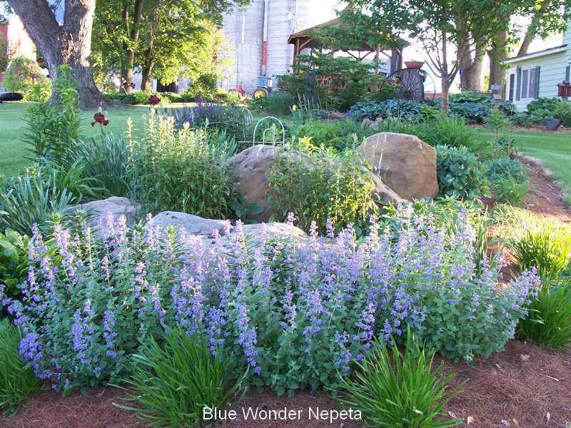 Speaking of perennials favorite perennials for Low maintenance perennials for shade