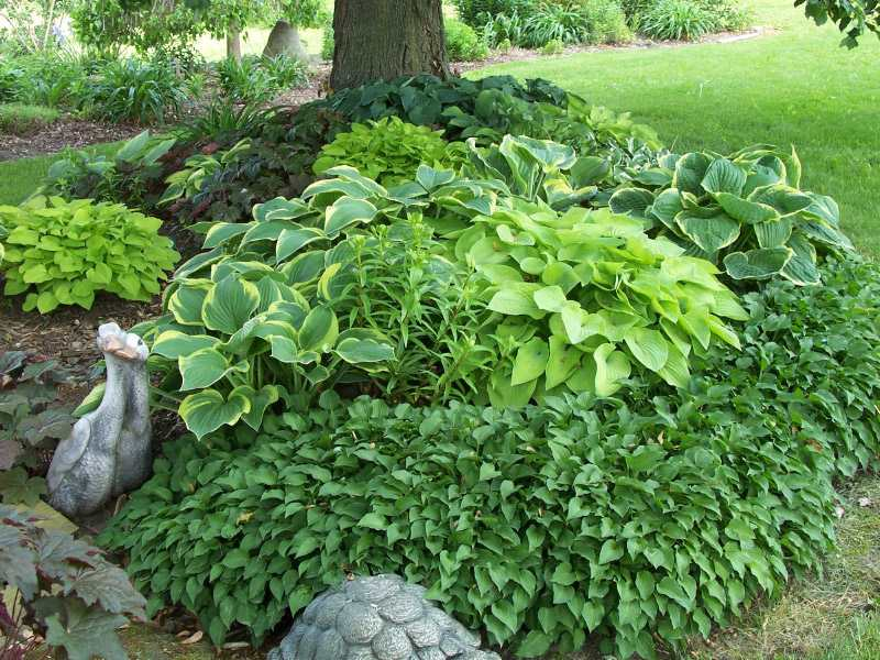 hosta garden design on Design Ideas For Hosta Gardens