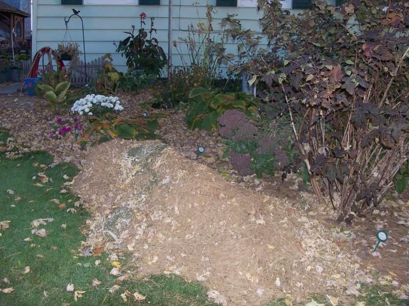 Pine Needle Mulch For Gardens Favorite Perennials