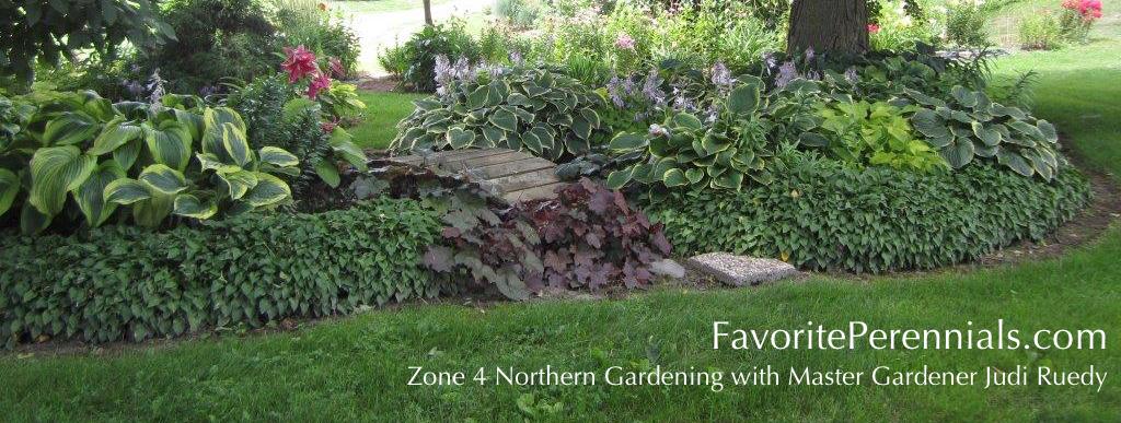 Container Gardening For Hostas Favorite Perennials